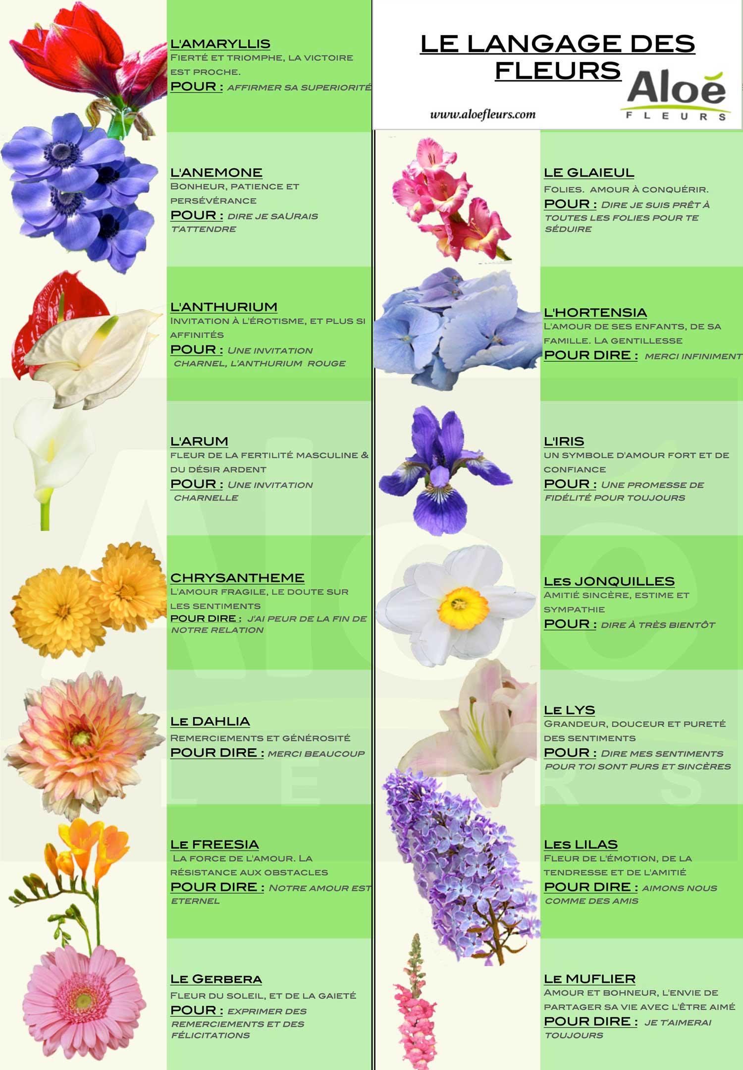 langage-des-fleurs-CP1-1500px